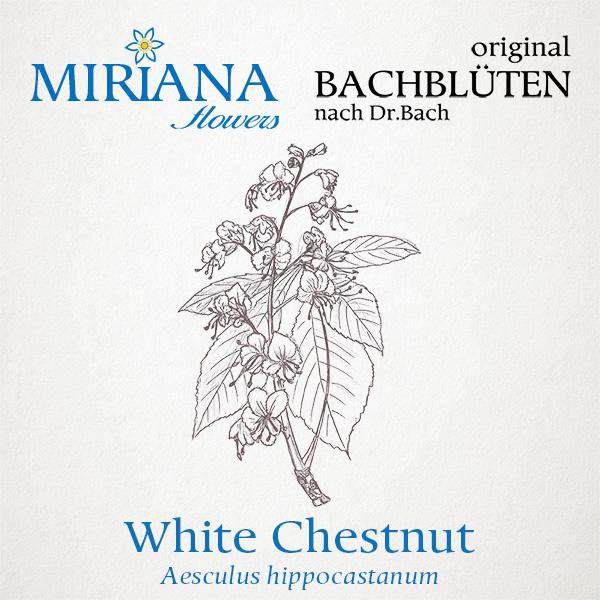 35 White Chestnut 20g Bach-Globuli MF*